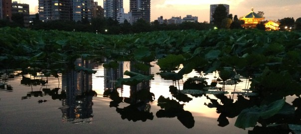 Mirror water surface with Sunset at Shinobazu-no-ike