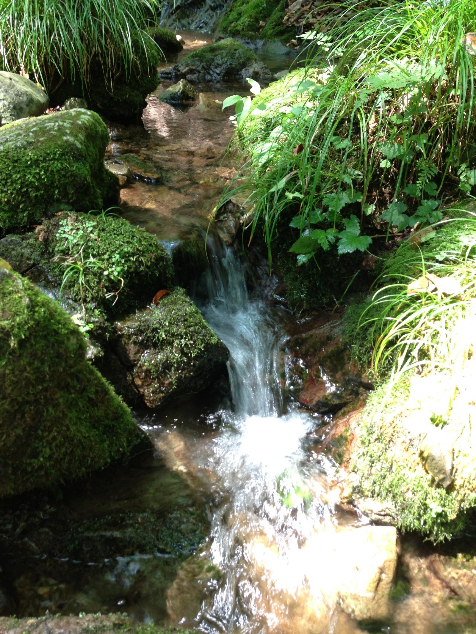 Mt. Mitake rock garden 3