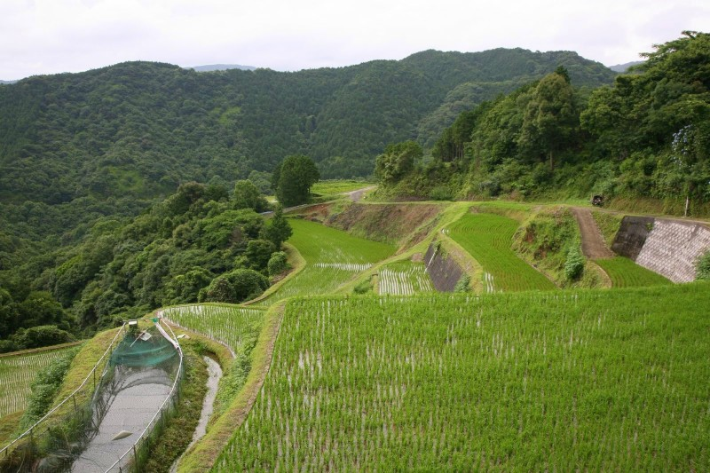 Terraced rice field in Nagasaki.