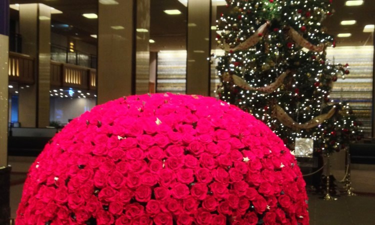 X'mas and one thousand roses