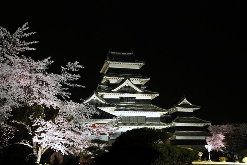 Matsumoto castle and Cherry blossoms