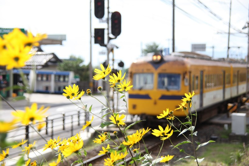Ichibata line