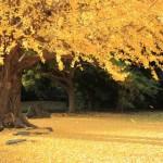 Hamarikyu Gardens in autumn