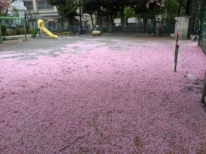 Pink carpet and Pink storm