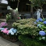 Hakusan Jinja, Bunkyo-ku, Tokyo