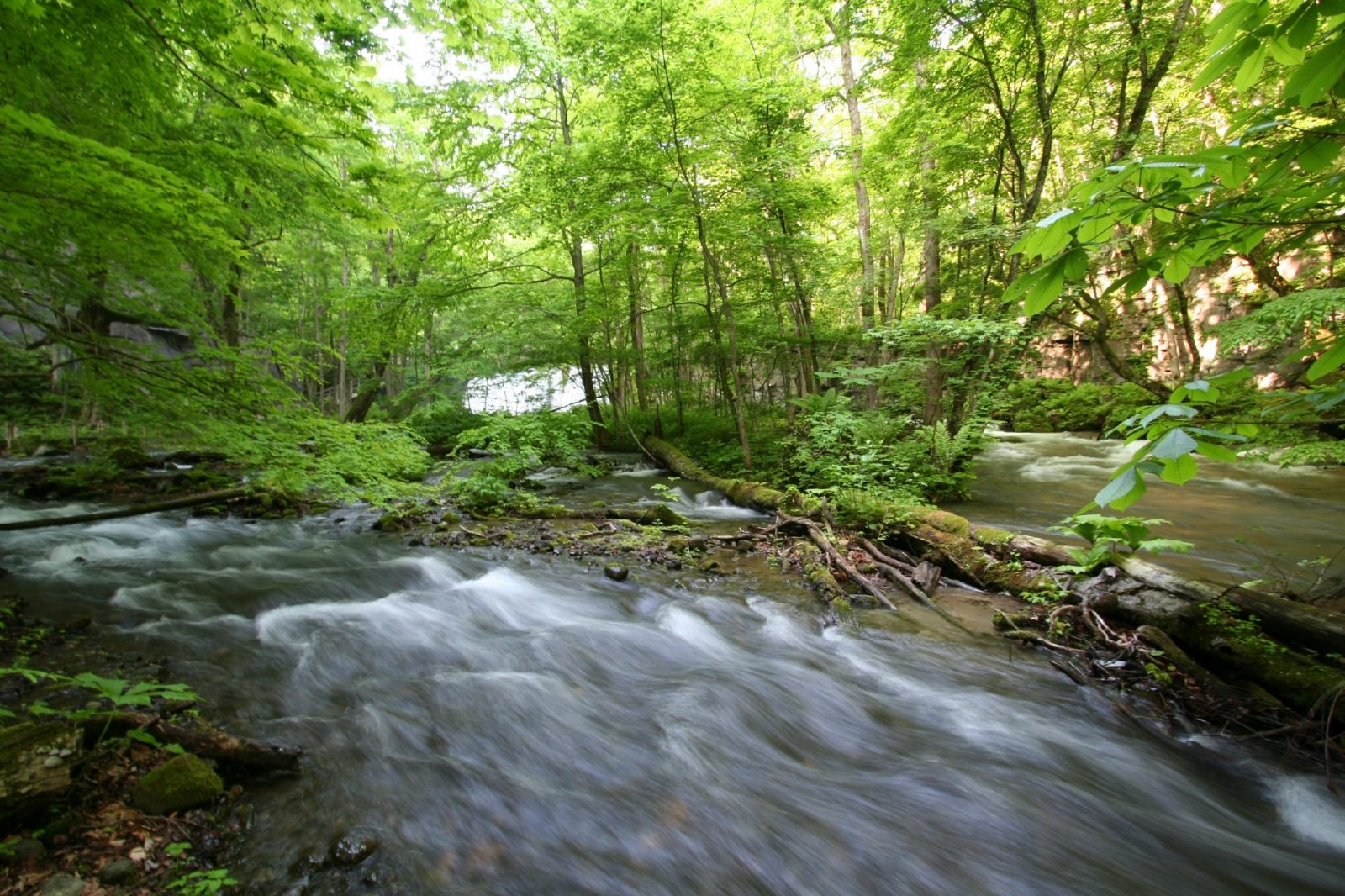 Earth Week: A Stream Is a Stream Is a Stream: Or Is It