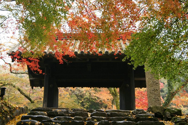 Akizuki castle in autumn