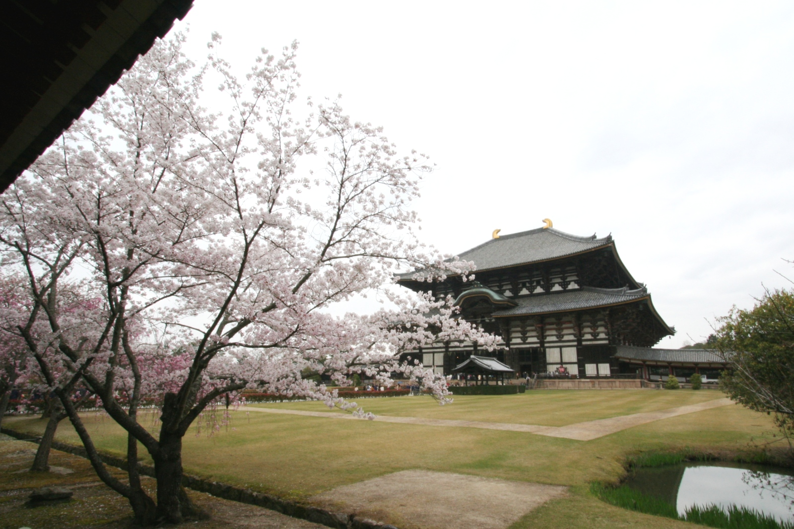 Todaiji and Cherry blossoms