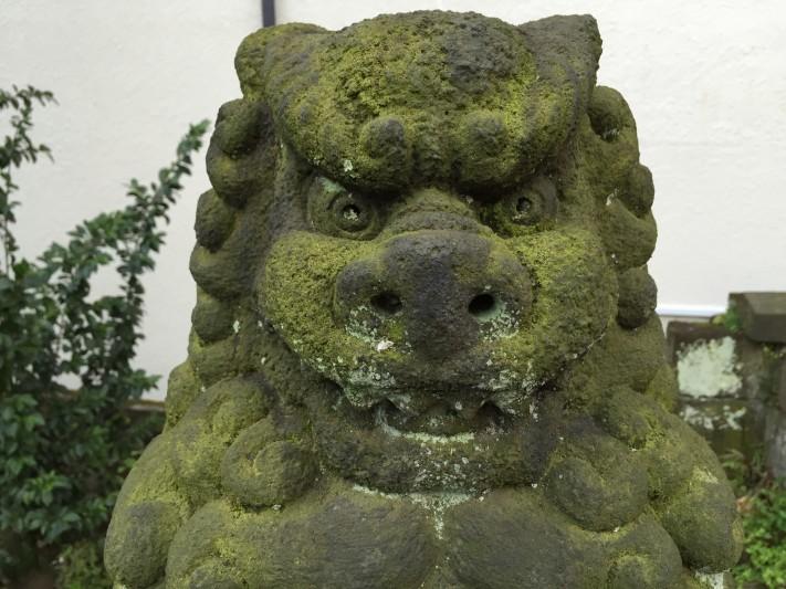 Mossy gurdian dog
