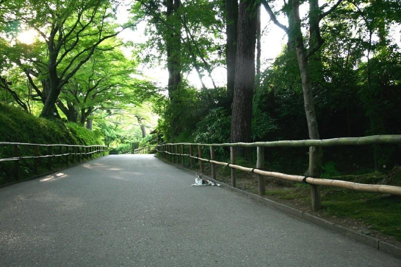 Chusonji, Hiraizumi