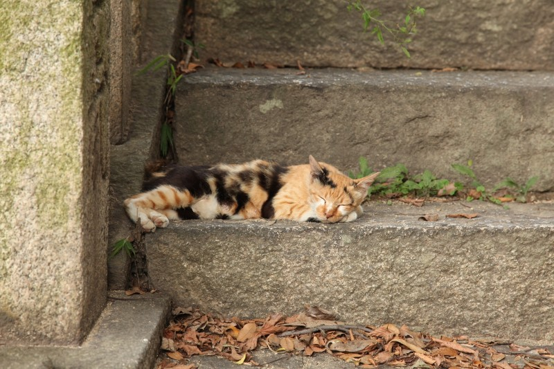 A cat in Tomonoura