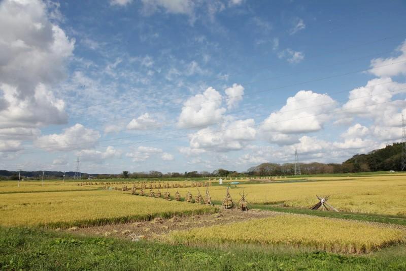 Rice paddy in Osyu, Iwate.